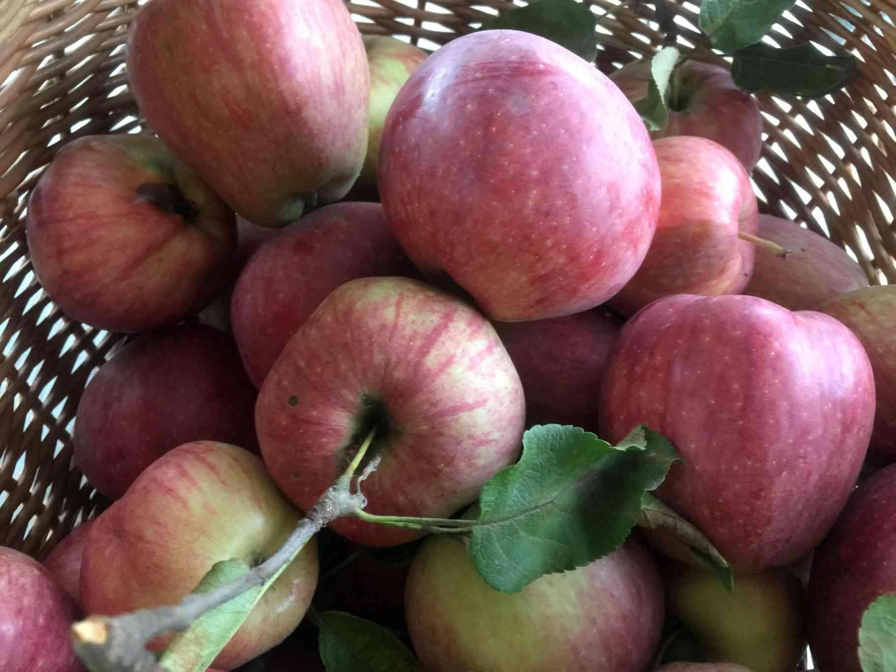 Egy almafa öt hónapja