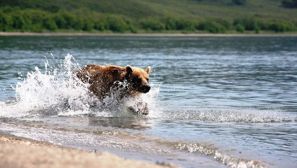 A medve és a halász (február 2-i történet) – +18!!!